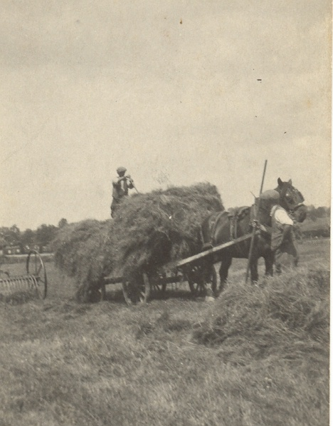 hay cart in field drawn by horse