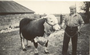 Fred Badger - with Archibald Ponsonby Smythe, Hereford Bull