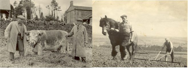 Fred Badger and another with prize bull and two men ploughing field with horse drawn plough