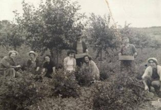 Fruit picking at Reg Smiths 1940s