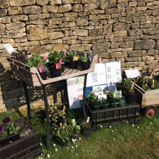 Mini garden centre! Rachel Cunynghame has raised over £1000 for Campden Edge by leaving plants for sale outside her garden.