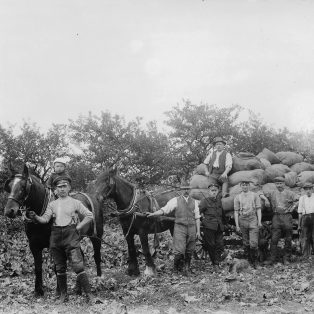 WWI POWs in the fields with local farmers | Jesse Taylor