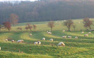 Campden's Landscape